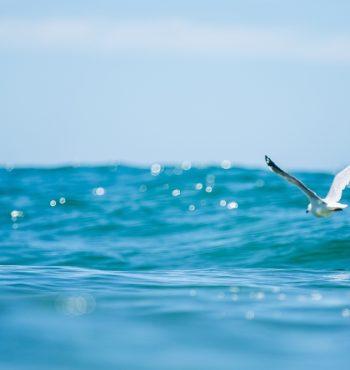 aos16_day8_surf-lucas_palma-__large